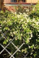 Flowers and a fence by 7whitefire7