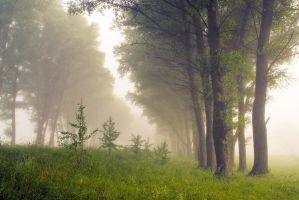 Misty morning V by mannromann