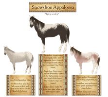 The American Clay Horse -Snowshoe Appaloosa- by 11IceDragon11