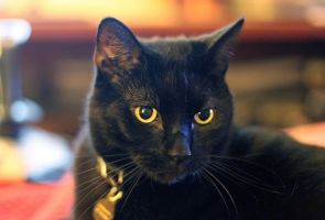 Black Cat by photoboater