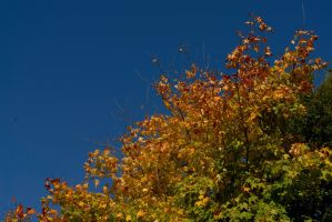 fire tree by in-my-viewfinder