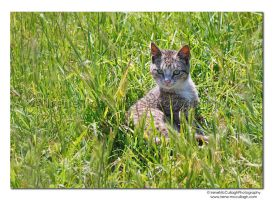 Kitten in Green Grass by substar