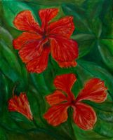 Hibiscus blossoms by PeterTBexley