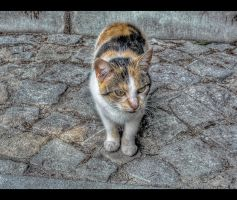 kitty kitty... by Iulian-dA-gallery