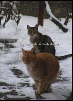 717 by evy-and-cats
