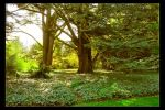 Stately Trees by Forestina-Fotos