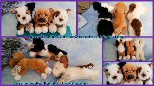Russ Yomiko Classic Mixed Breed dogs! by Vesperwolfy87