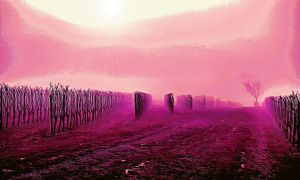 Vineyard Dream by montag451