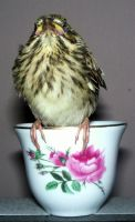 Bird  N  Cup 6 by Penny-Stock