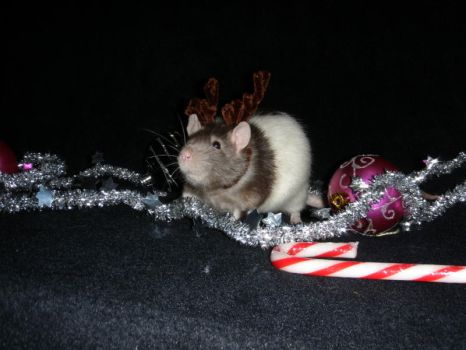 Merry Ratty Christmas by salembaby