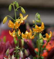 Malvern Show May 2014 3 3 by melrissbrook