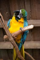 Revisiting the parrot by shakita45