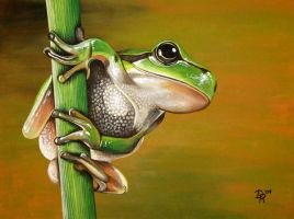 Tree Frog by DanielleHope