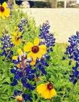 Texas Wild Flowers by LadyIvyGreen