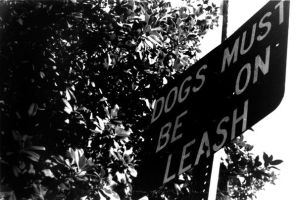 dogs must be on leash by invisibletape