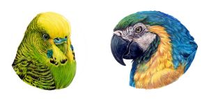 Parakeet and parrot in pencils by Wildkunst