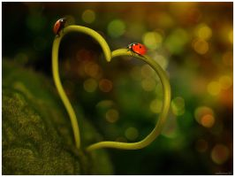 Just LOVE by Damiano79