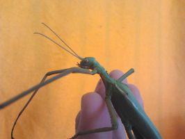 Key's Stick Insect by Drhoz