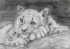Snow Leopard by Animash