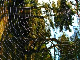 Spider web by daliahme