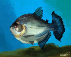 It's a piranha! by RachelleFryatt