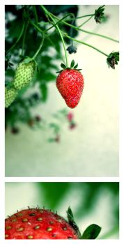 strawberry fields forever II by ibas