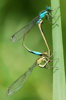 Dragonfly3 by red-FeNIks