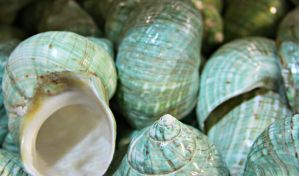 shell texture 12 by SnapColorCreations
