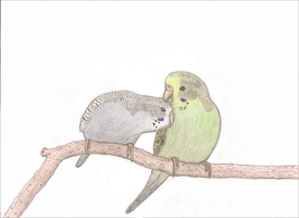 Budgie pair by herofan135