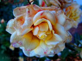 The Last of a Beauty like you... by Michies-Photographyy