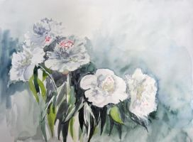 Peonies. May by Metttko