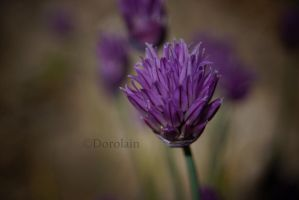 Purple blossom 2 by dorolain