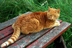 Louis, The Cathedral Cat by EarthHart