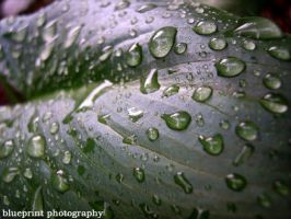 dripping leaf by indie-click