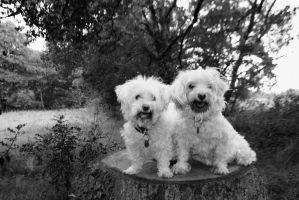 Dogs black and white by FineFien