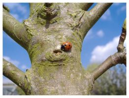 Red Ladybird by AndyBuck
