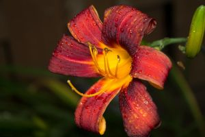 Flower rainy day by jonathanfaulkner