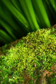 Moss by vincesw