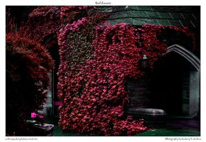 Red Leaves by andrewszackary75