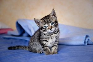 Baby cat 2 by Flore-stock