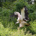 vulture V by mimose-stock