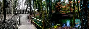 Forest Panorama by rebel28