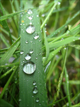 Water Droplets by Frances23