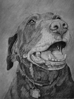 Drawing of A Dog by TheRoamingArtist