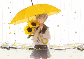 rain and sunflower by kumashige