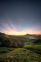 Ray of light Sunrise in Cameron Highland by fighteden
