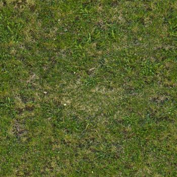 Seamless tileable grass texture by demolitiondan