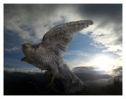 Rising of the Hawk by DerRiedl