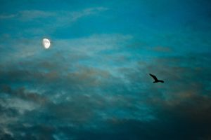 Flying by the moon by Silisav