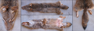 Takoda by BlackBackedJackal